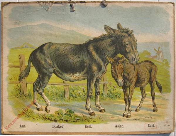 733 - Ane, Donkey, Esel, Asino, Ezel